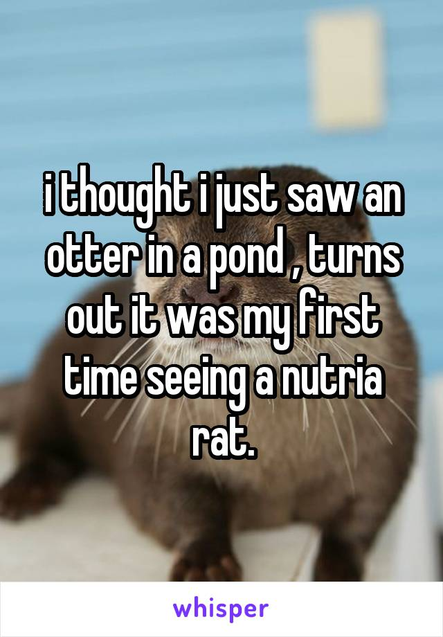 i thought i just saw an otter in a pond , turns out it was my first time seeing a nutria rat.
