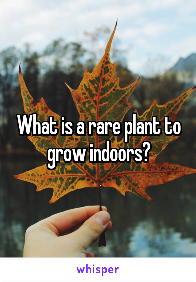 What is a rare plant to grow indoors?
