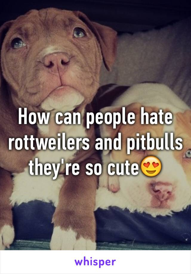 How can people hate rottweilers and pitbulls they're so cute😍