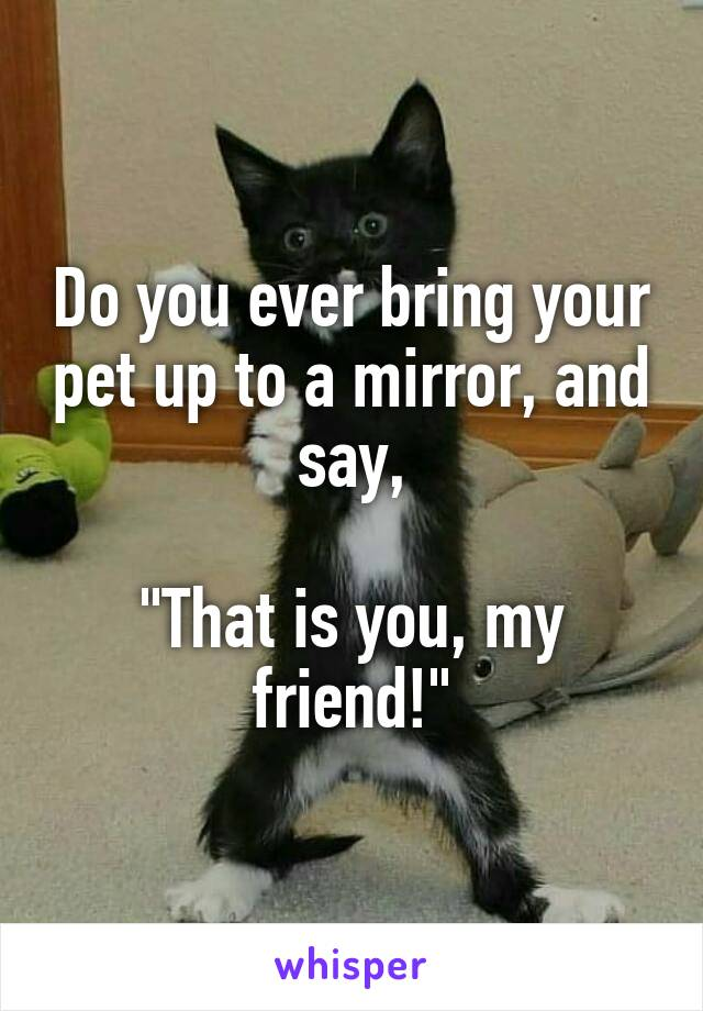 """Do you ever bring your pet up to a mirror, and say,  """"That is you, my friend!"""""""