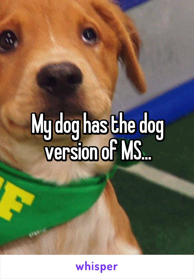 My dog has the dog version of MS...