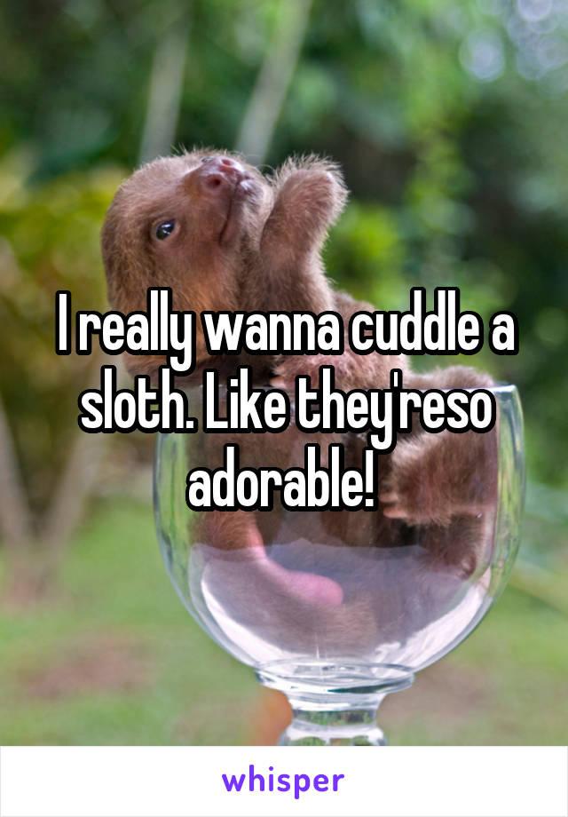 I really wanna cuddle a sloth. Like they'reso adorable!