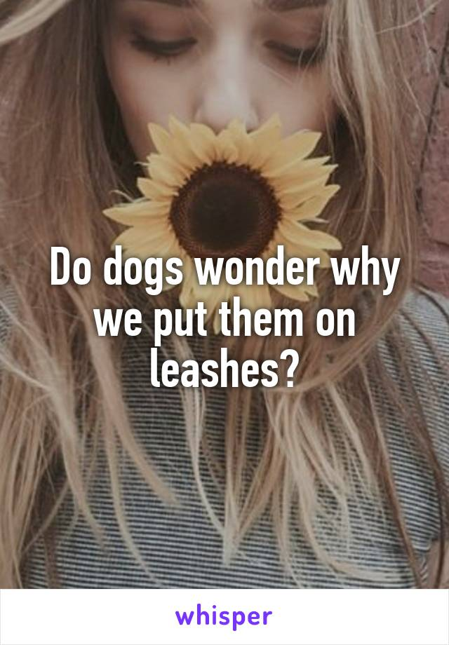 Do dogs wonder why we put them on leashes?