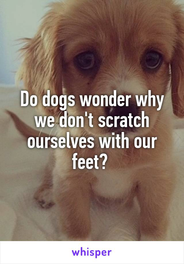 Do dogs wonder why we don't scratch ourselves with our feet?