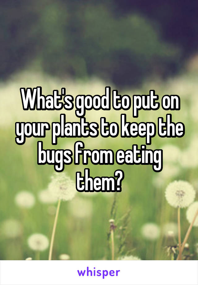 What's good to put on your plants to keep the bugs from eating them?