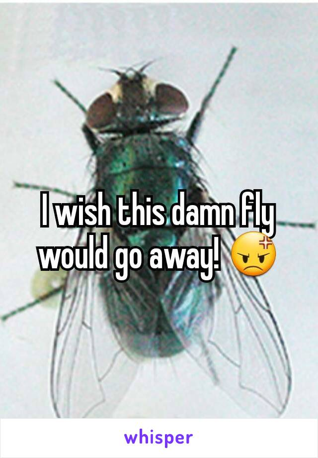 I wish this damn fly would go away! 😡
