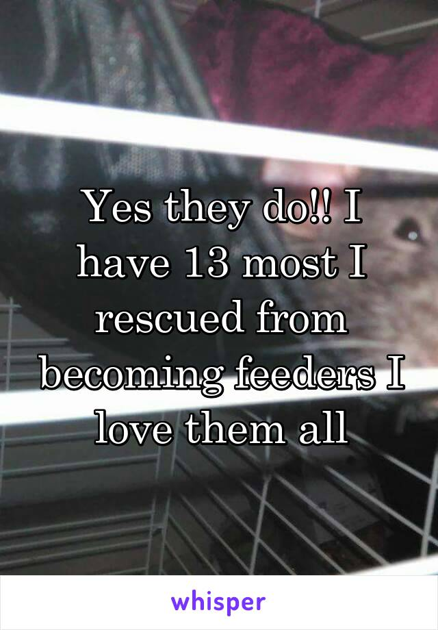 Yes they do!! I have 13 most I rescued from becoming feeders I love them all