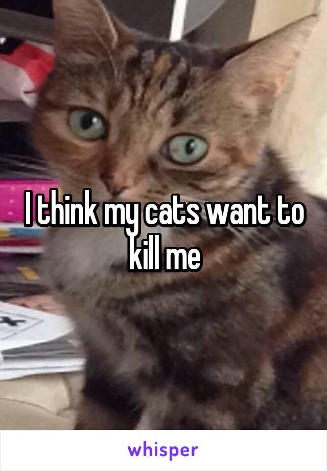 I think my cats want to kill me