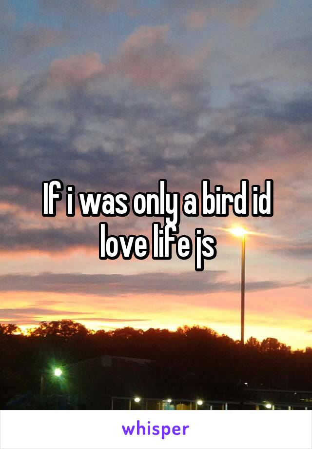 If i was only a bird id love life js