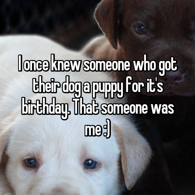 I once knew someone who got their dog a puppy for it's birthday. That someone was me :)