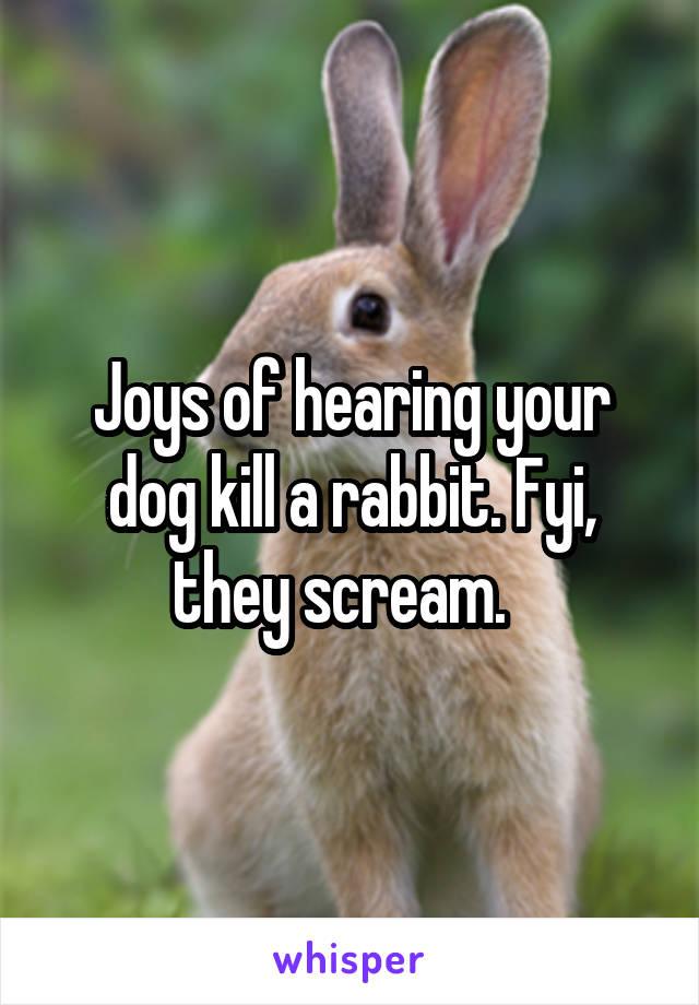 Joys of hearing your dog kill a rabbit. Fyi, they scream.