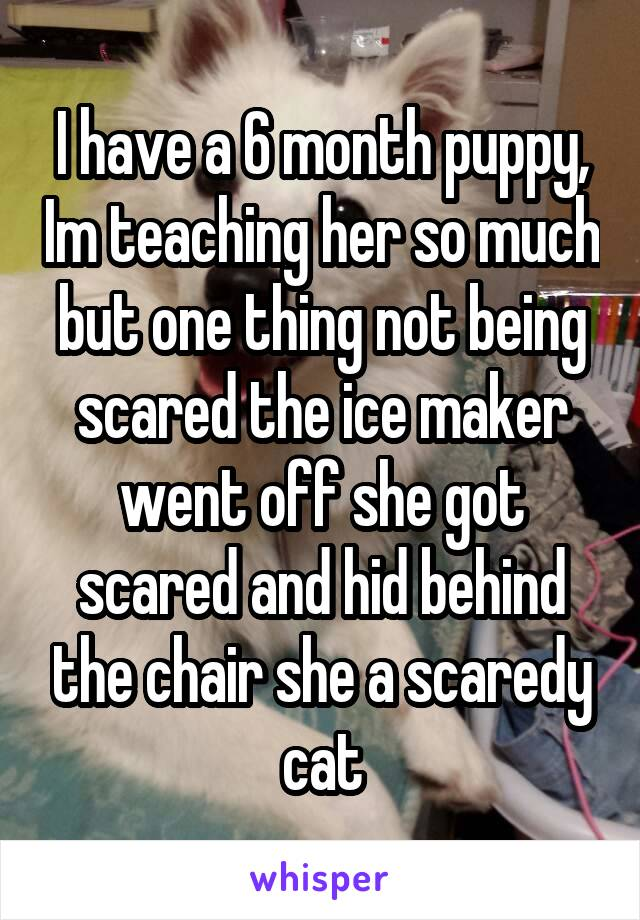 I have a 6 month puppy, Im teaching her so much but one thing not being scared the ice maker went off she got scared and hid behind the chair she a scaredy cat
