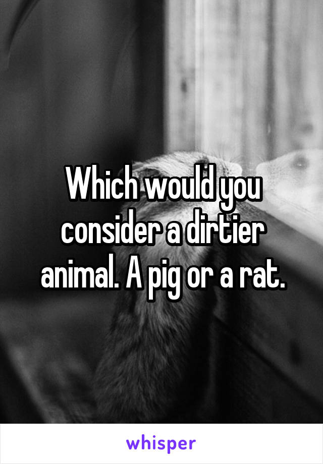 Which would you consider a dirtier animal. A pig or a rat.