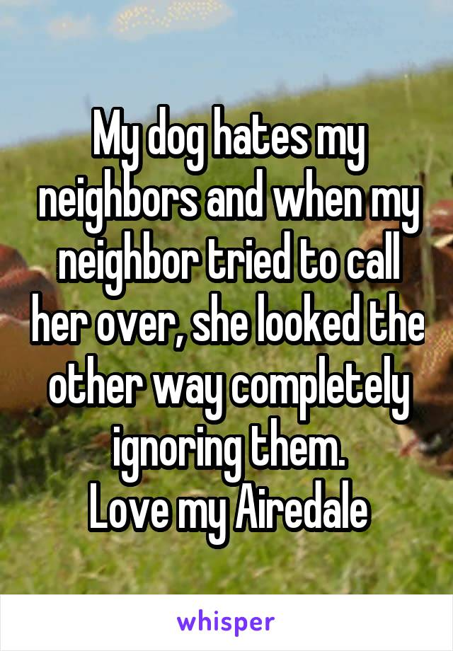 My dog hates my neighbors and when my neighbor tried to call her over, she looked the other way completely ignoring them. Love my Airedale