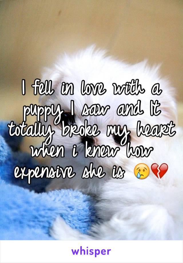 I fell in love with a puppy I saw and It totally broke my heart when i knew how expensive she is 😢💔