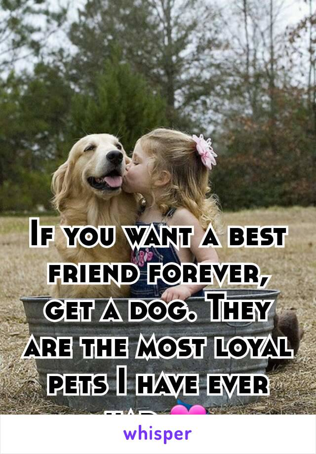 If you want a best friend forever, get a dog. They are the most loyal pets I have ever had.💝
