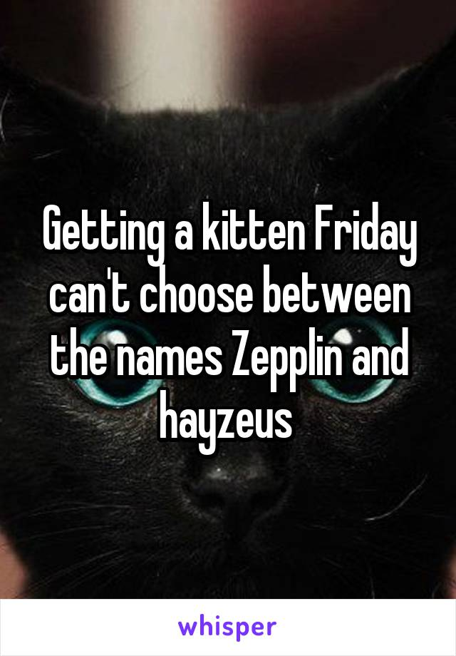 Getting a kitten Friday can't choose between the names Zepplin and hayzeus