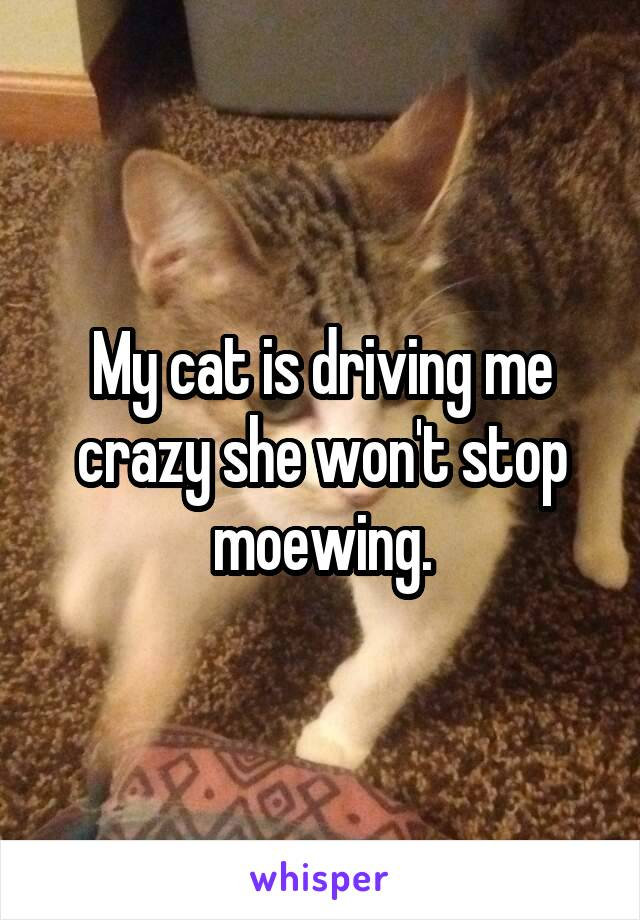 My cat is driving me crazy she won't stop moewing.