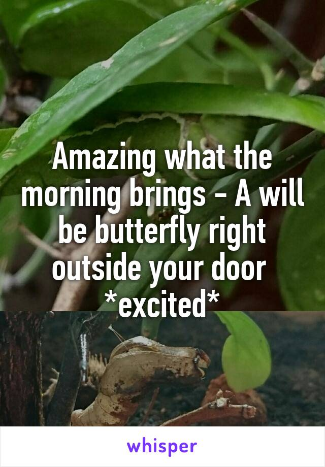 Amazing what the morning brings - A will be butterfly right outside your door  *excited*
