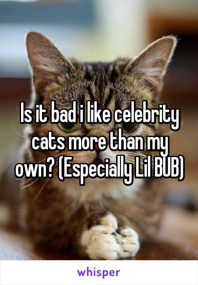 Is it bad i like celebrity cats more than my own? (Especially Lil BUB)
