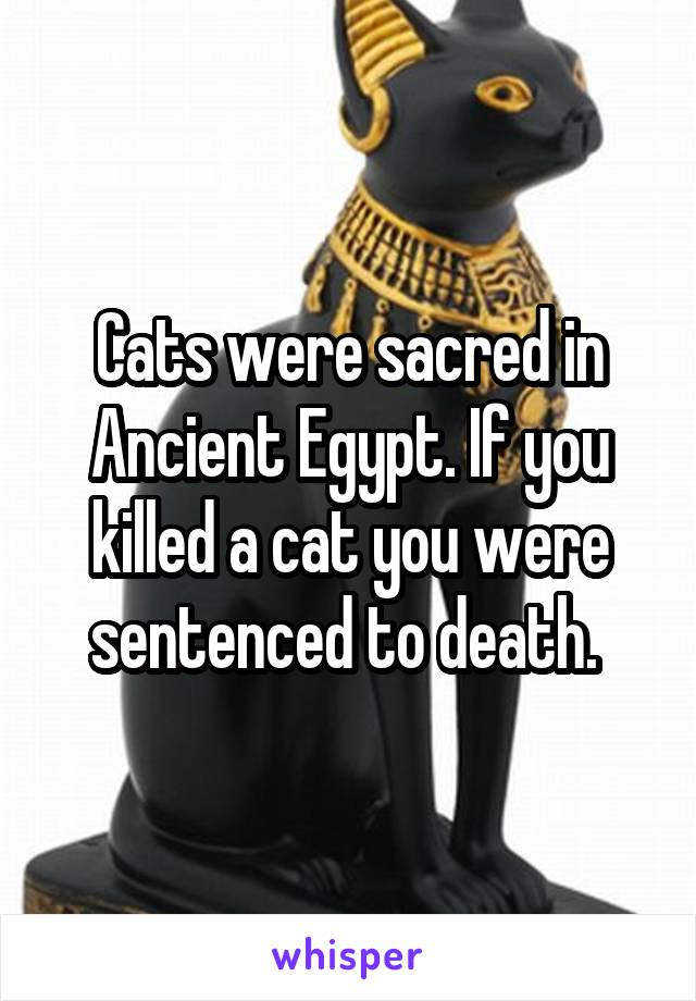 Cats were sacred in Ancient Egypt. If you killed a cat you were sentenced to death.