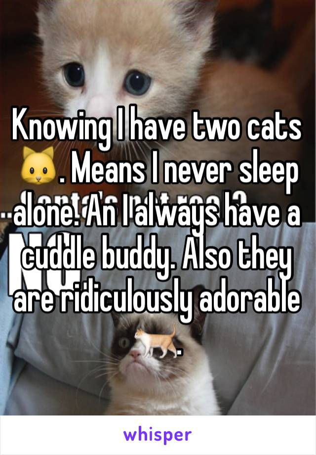 Knowing I have two cats 🐱. Means I never sleep alone. An I always have a cuddle buddy. Also they are ridiculously adorable 🐈.