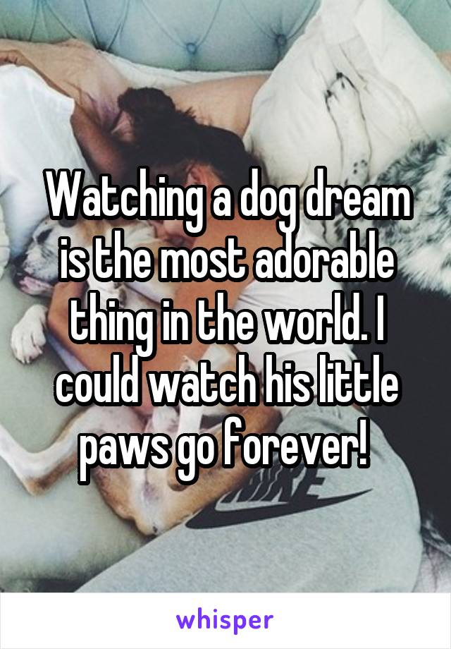 Watching a dog dream is the most adorable thing in the world. I could watch his little paws go forever!
