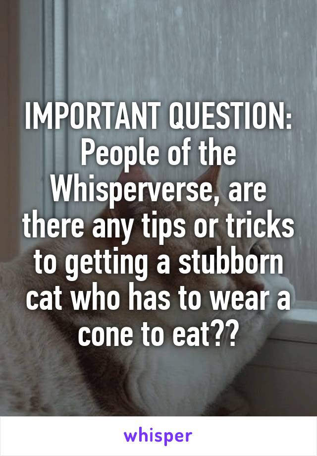 IMPORTANT QUESTION: People of the Whisperverse, are there any tips or tricks to getting a stubborn cat who has to wear a cone to eat??