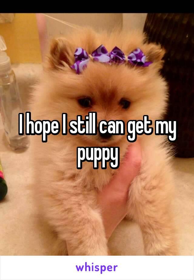 I hope I still can get my puppy