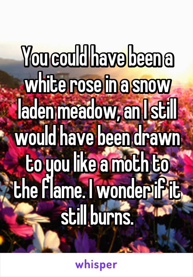 You could have been a white rose in a snow laden meadow, an I still would have been drawn to you like a moth to the flame. I wonder if it still burns.