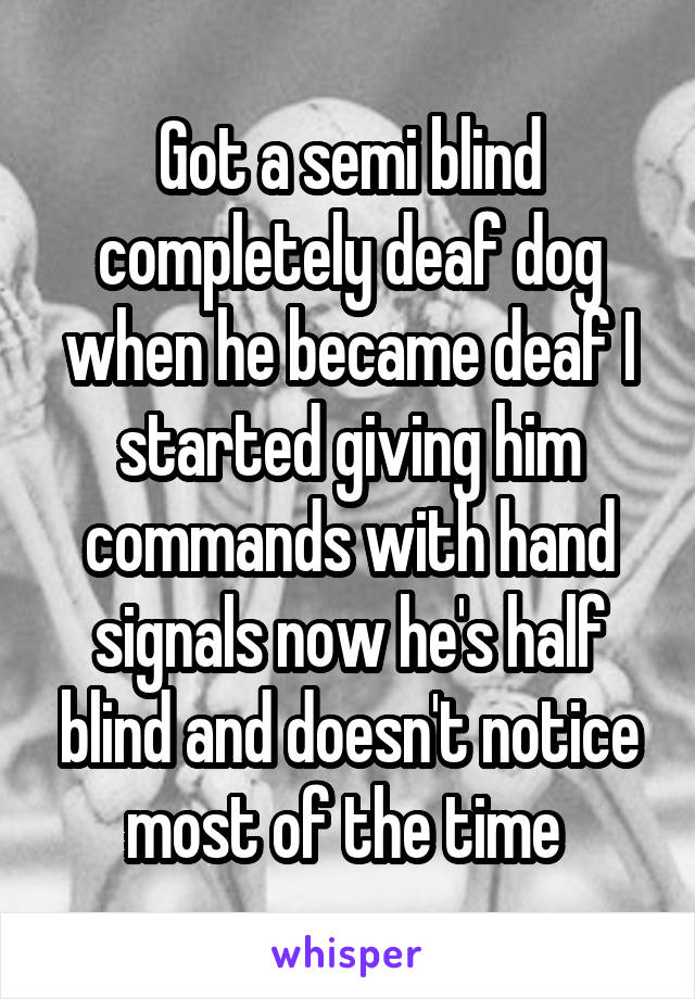 Got a semi blind completely deaf dog when he became deaf I started giving him commands with hand signals now he's half blind and doesn't notice most of the time