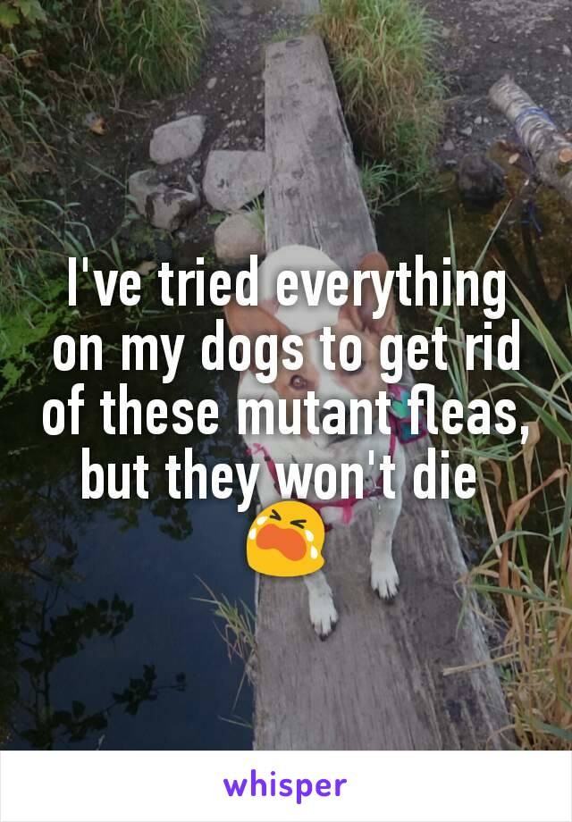I've tried everything on my dogs to get rid of these mutant fleas, but they won't die  😭