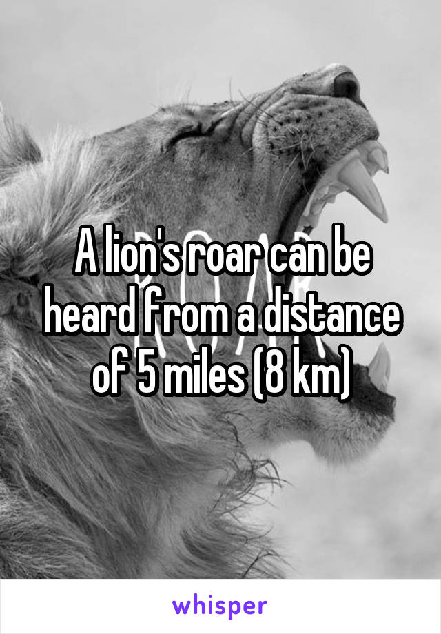 A lion's roar can be heard from a distance of 5 miles (8 km)