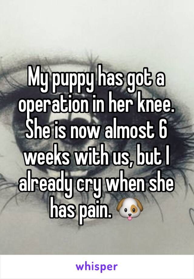 My puppy has got a operation in her knee. She is now almost 6 weeks with us, but I already cry when she has pain. 🐶