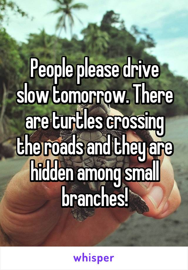 People please drive slow tomorrow. There are turtles crossing the roads and they are hidden among small branches!