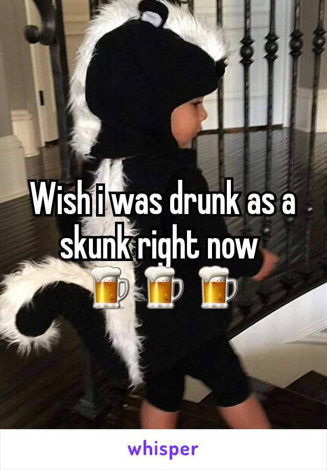 Wish i was drunk as a skunk right now  🍺🍺🍺