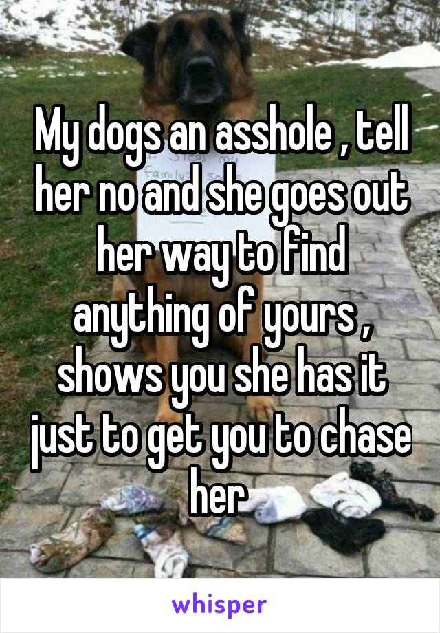 My dogs an asshole , tell her no and she goes out her way to find anything of yours , shows you she has it just to get you to chase her