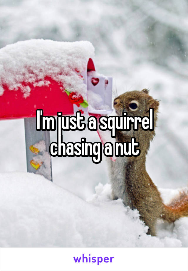 I'm just a squirrel chasing a nut