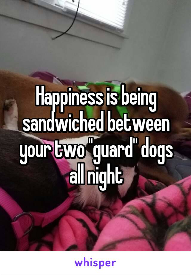 """Happiness is being sandwiched between your two """"guard"""" dogs all night"""