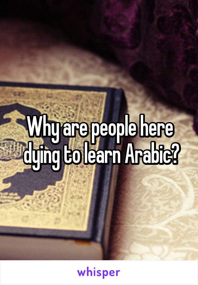 Why are people here  dying to learn Arabic?