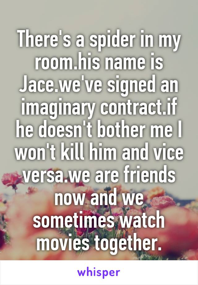 There's a spider in my room.his name is Jace.we've signed an imaginary contract.if he doesn't bother me I won't kill him and vice versa.we are friends now and we sometimes watch movies together.