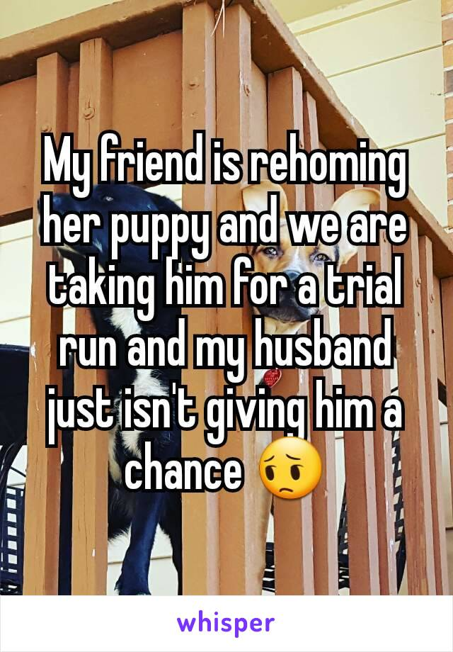 My friend is rehoming her puppy and we are taking him for a trial run and my husband just isn't giving him a chance 😔