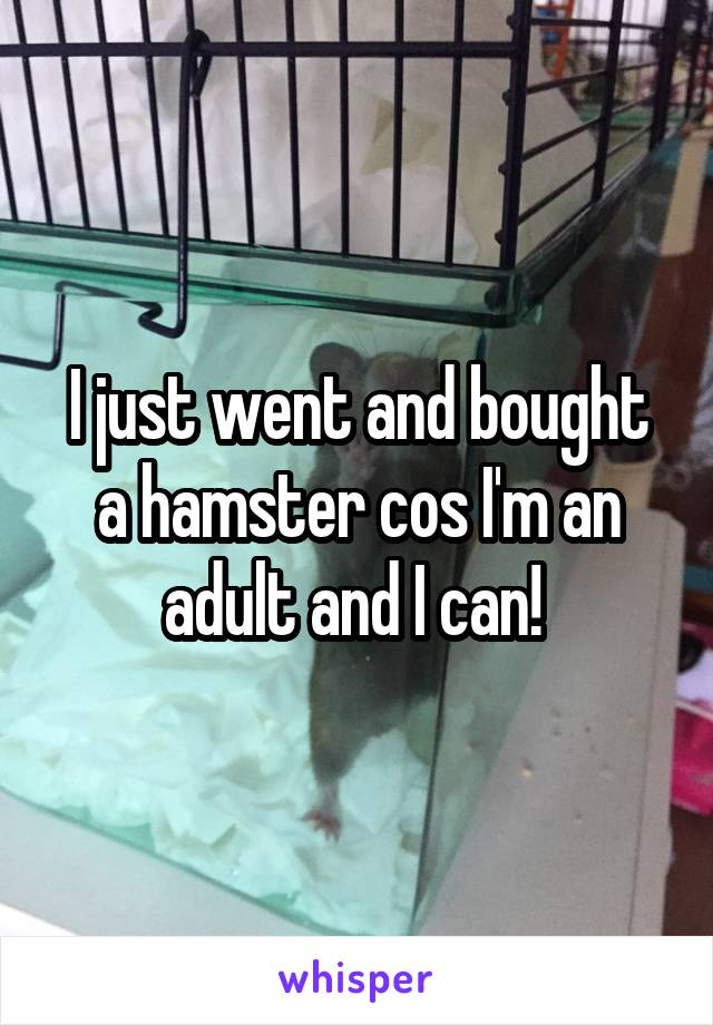 I just went and bought a hamster cos I'm an adult and I can!