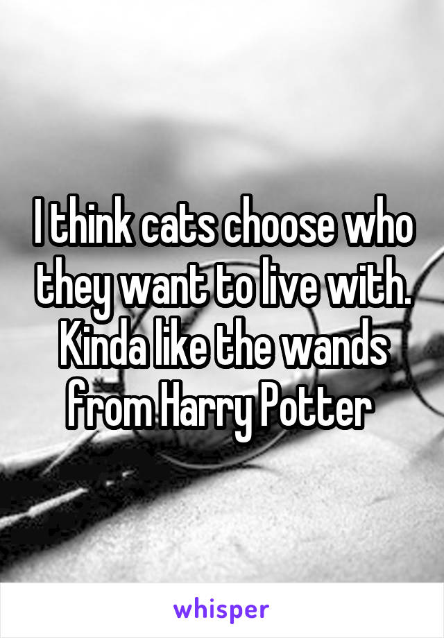 I think cats choose who they want to live with. Kinda like the wands from Harry Potter
