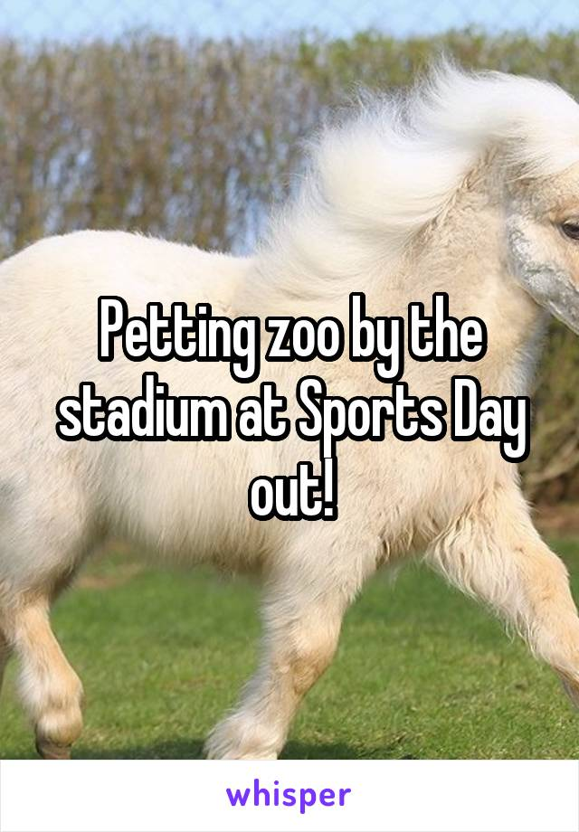 Petting zoo by the stadium at Sports Day out!