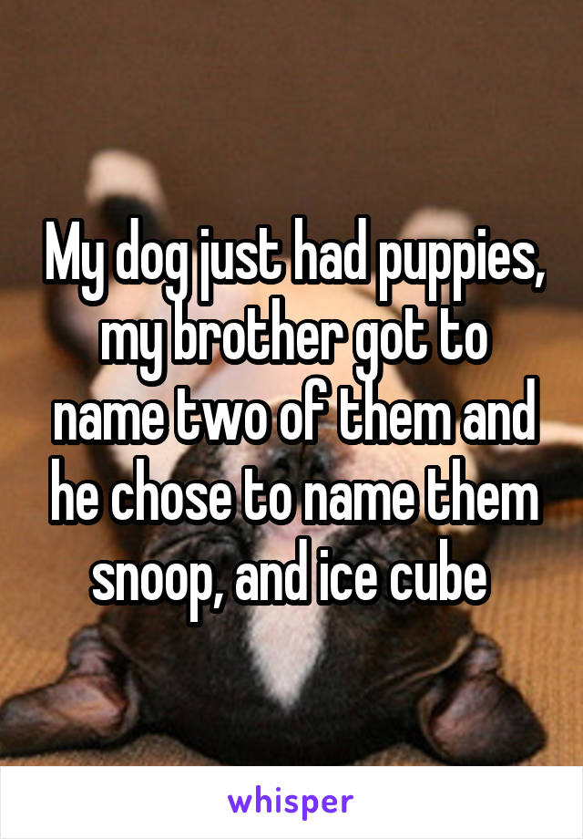 My dog just had puppies, my brother got to name two of them and he chose to name them snoop, and ice cube