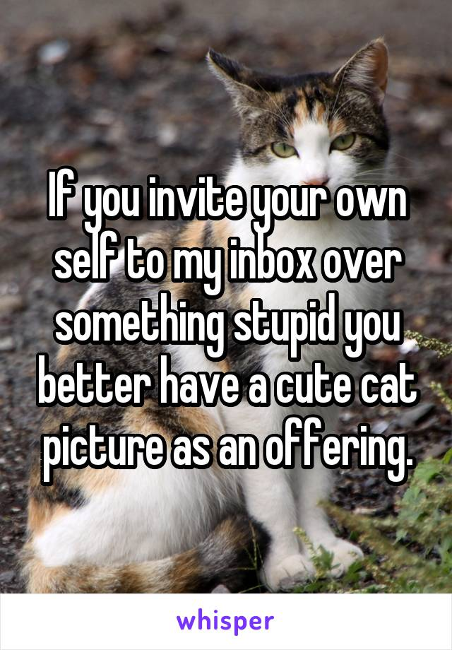 If you invite your own self to my inbox over something stupid you better have a cute cat picture as an offering.