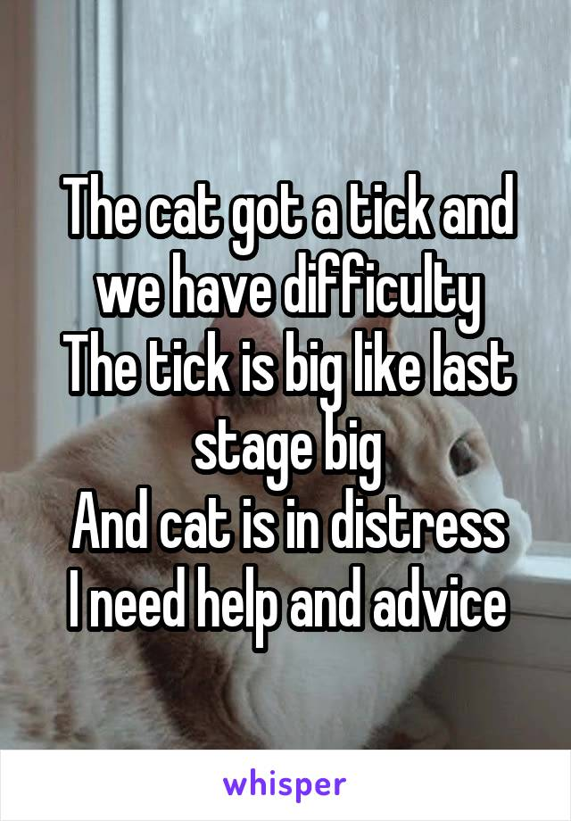 The cat got a tick and we have difficulty The tick is big like last stage big And cat is in distress I need help and advice