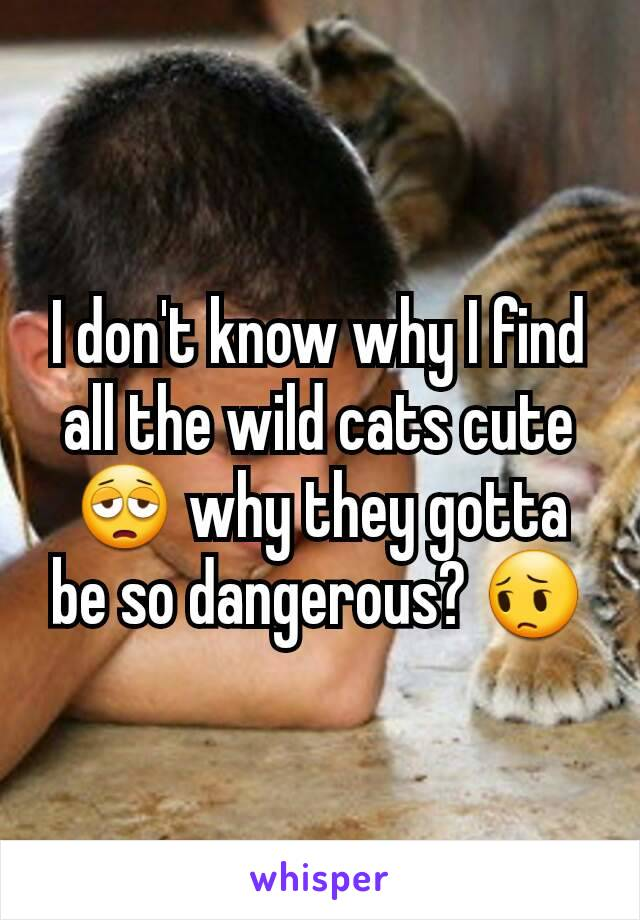 I don't know why I find all the wild cats cute 😩 why they gotta be so dangerous? 😔
