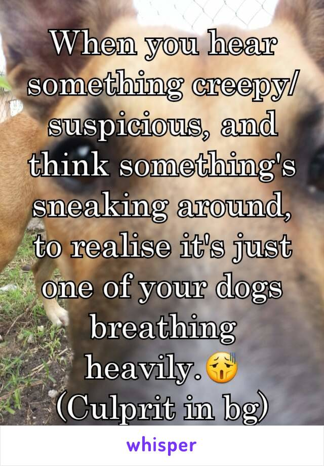 When you hear something creepy/suspicious, and think something's sneaking around, to realise it's just one of your dogs breathing heavily.😫 (Culprit in bg)